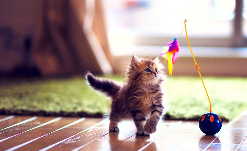 cute_kitten_playing-wallpaper